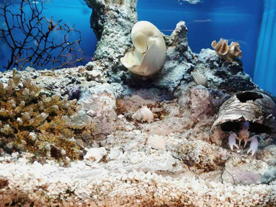 sea shells at Aquaria KLCC