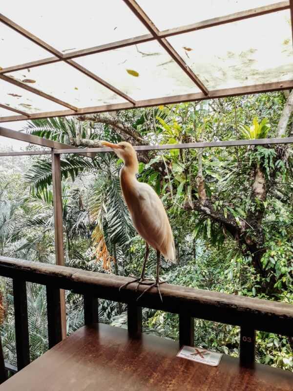Bird in KL Bird Park