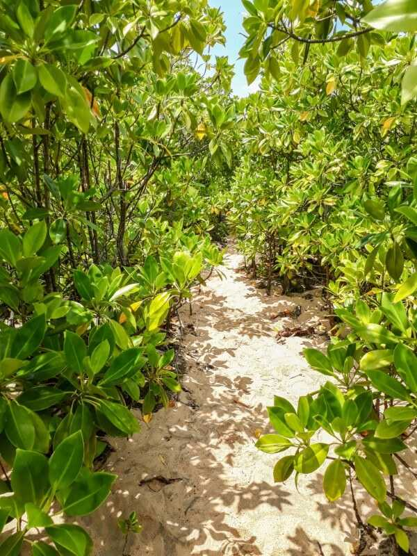 Hiking in between mangroves to Pont Naturel