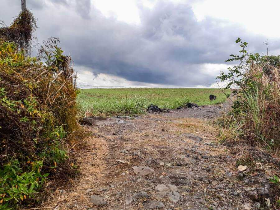 hiking trail in the middle of a sugar cane field which leads to Pont Naturel
