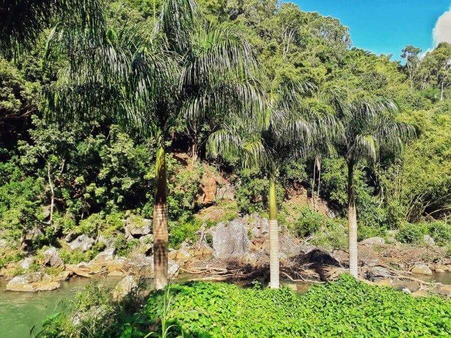Palm trees at Eureka Waterfall Mauritius