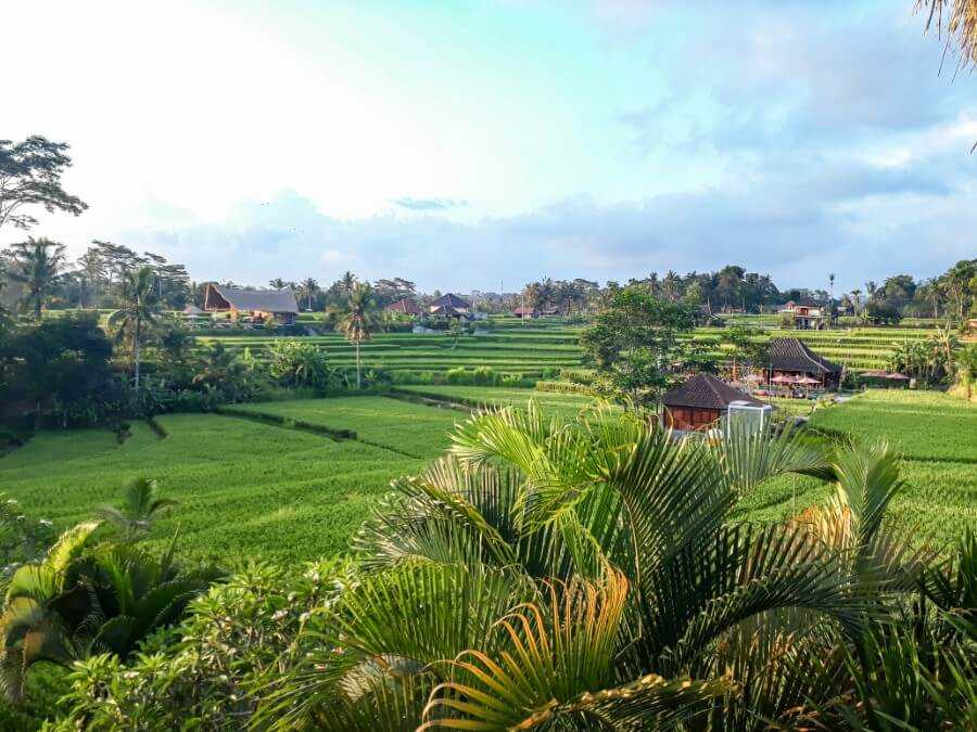 Rice paddies at the end of Campuhan Ridge Walk, Ubud, Bali