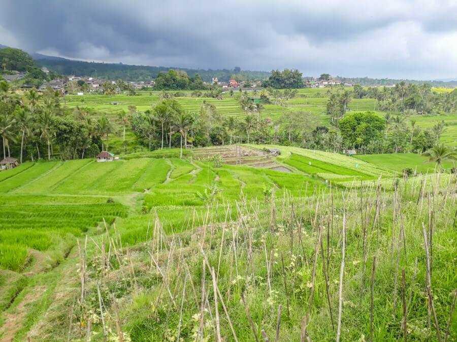 Panoramic view at Jatiluwih