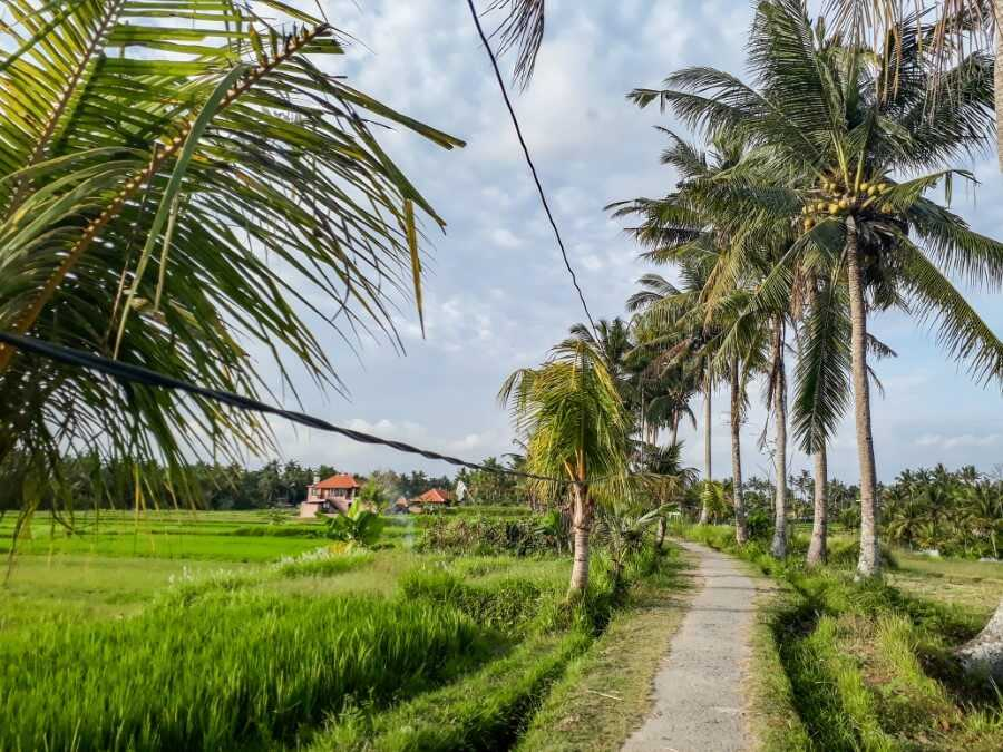 Subak Juwuk Manis Rice Fields in Ubud