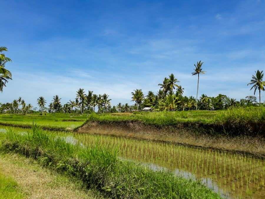 Secret rice paddies near Dusun Kuning Waterfall