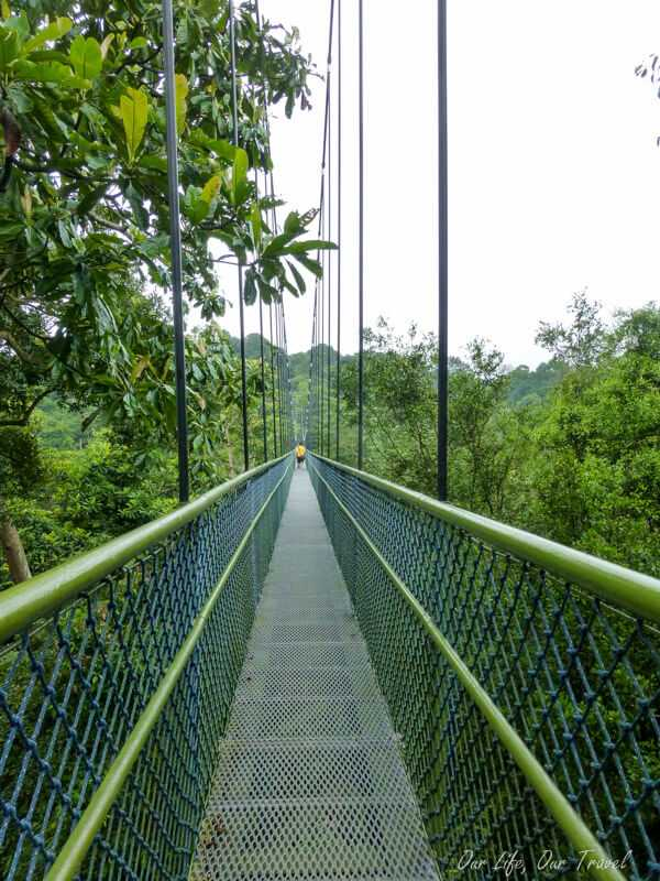 Treetop walk surrounded by a canopy of trees