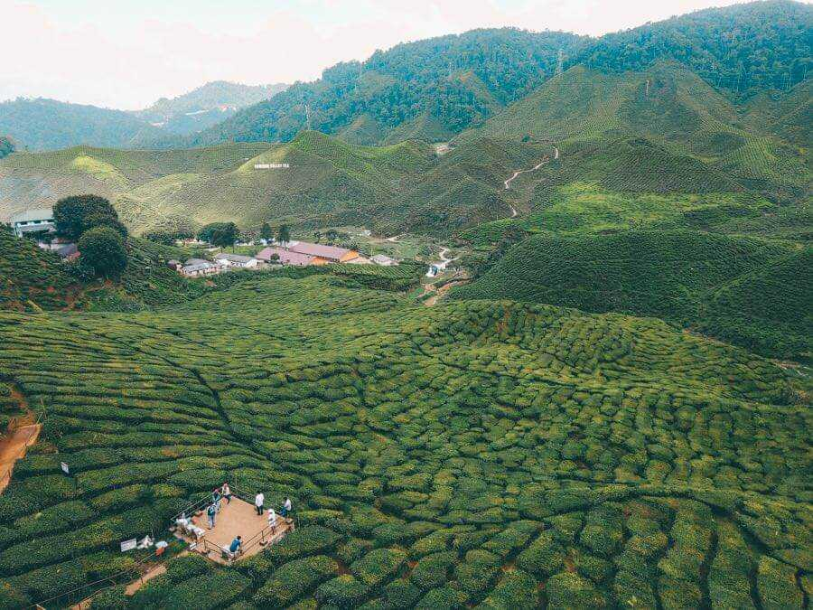 Visiting the Cameron Highlands tea plantations is a must for a weekend getaway in Malaysia