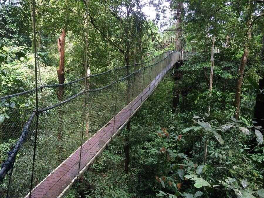 Canopy bridge surrounded by a rainforest in the Mulu National Park