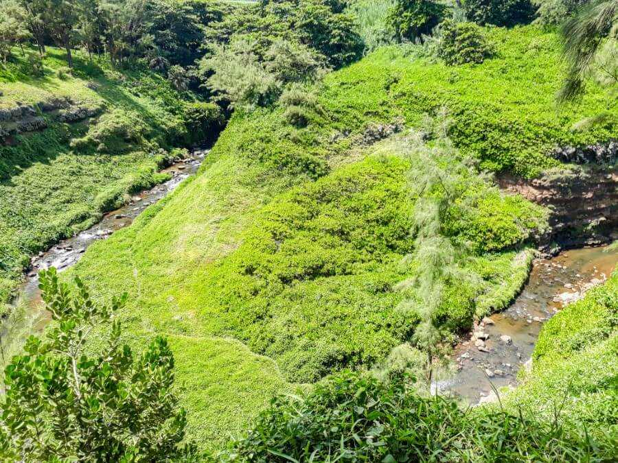 River snaking along a lush vegetation