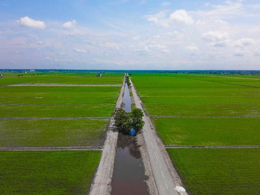 Lush rice paddies in Sekinchan Malaysia