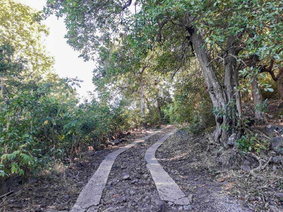 Concrete path along the trail of Le Morne