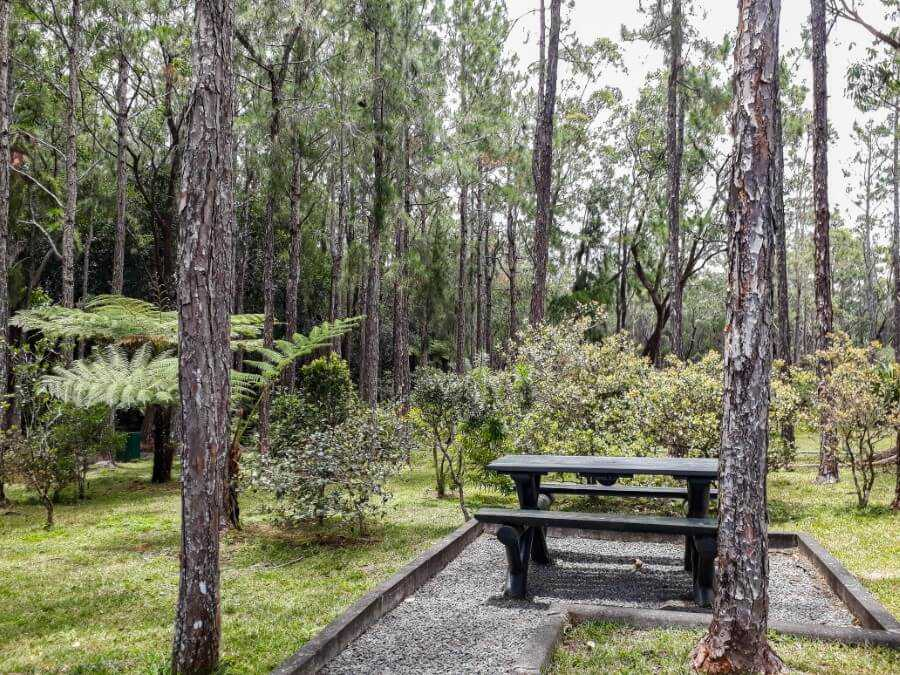 wooden tables and benches in the middle of a forest at Petrin Mauritius